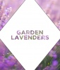 The Shade: Garden Lavenders
