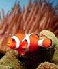 Fish Tattoo Symbolism: