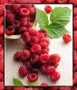 Raspberries for Skin