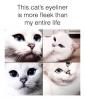 This Kitty's Cat-Eye