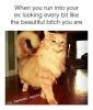 This Confident Cat