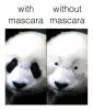 All Pandas