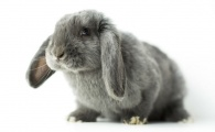 California Could Be the First State to Ban Animal Testing on Cosmetics