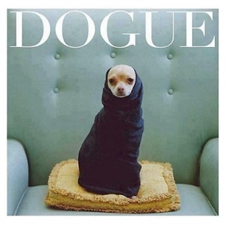Dog Vogue Is Exactly What You Think It Is