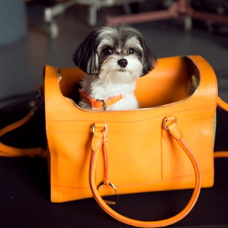 Ralph Lauren's Accessories -- Modeled by Adorable Doggies