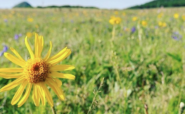 Arnica Is the Magical Healing Ingredient Missing From Your Skin Care Routine