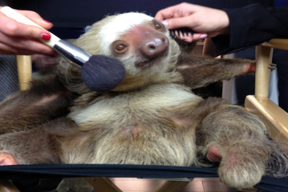 Weekend Recap: C.C. The Sloth, Psy's New Gig and More