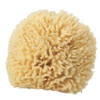 H2O+ Natural Sea Sponge