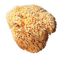 Caswell-Massey Natural Sea Sponge