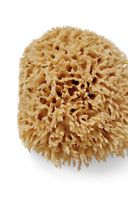 Crabtree & Evelyn Bath-Size Natural Sea Sponge