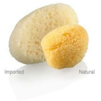 Max Factor Application Sponges