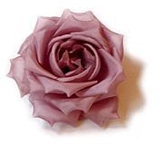 Dominique Duval One Rose on a Bobbi Pin