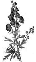Black Phoenix Alchemy Laboratory Rappaccini�s Garden LOVE-IN-IDLENESS